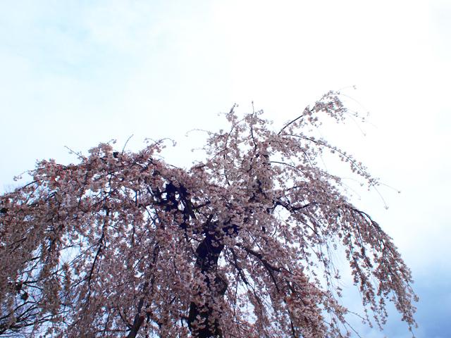 上賀茂神社1